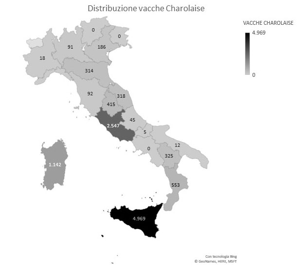 Distribuzione Charolaise sul territorio