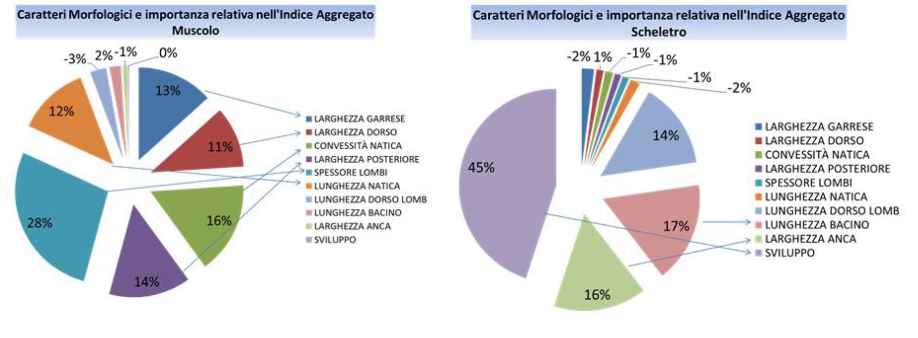 Pesi relativi dei 10 caratteri morfologici nei 2 indici aggregati